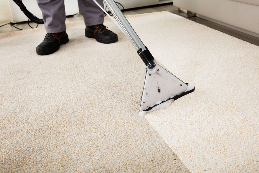 The Best Diy Carpet Cleaning What You Should Know About