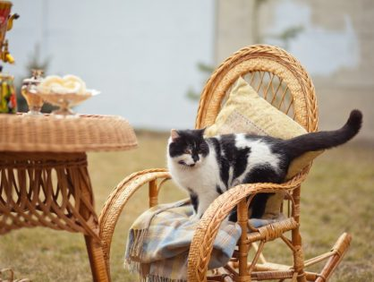 Patio Furniture Cleaning - When to do it
