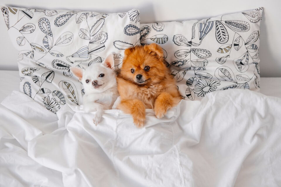 Pets and Your Mattress