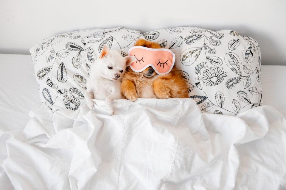 Hot Ideas For Your Winter Sleep